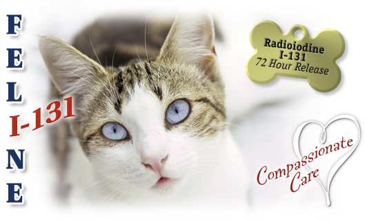 Feline Hyperthyroidism Info From Garden State Veterinary
